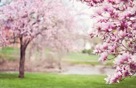 Equinozio di primavera 2019: data inizio e fine stagione primaverile