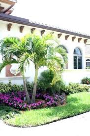 palm tree landscape ideas tqtq me