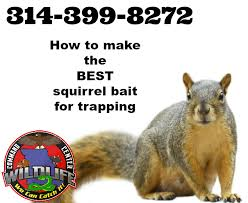 best squirrel bait for trapping