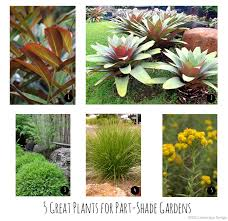 5 great plants for part shade gardens