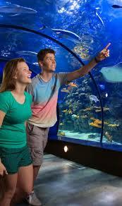 aquarium pyramid
