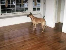 eliminate pet urine smell from hardwood