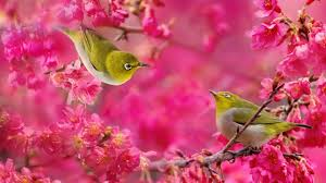 Free download images birds flowers wallpaper 1920 1080 birds flowers  wallpaper [1280x720] for your Desktop, Mobile & Tablet | Explore 45+ Flowers  and Birds Wallpaper | Bird Wallpaper for Walls, Wallpaper with