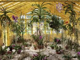 bonnet house museum gardens hosts