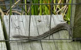 How To Build A Snake Rodent Proof Fence Using Snake Mesh