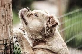 dog proof gardens