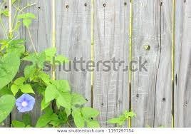 Old Rustic Wooden Fence Wooden Background Stock Photo Edit Now 1197297754