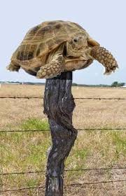 John O Connell On Twitter To Use An Old American Saying Boris Johnson In Number 10 Is A Turtle On A Fence Post He Didn T Get There By Himself He Doesn T Belong There