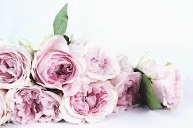 صور خلفيات وردي صور خلفيات الورد الجميلة عبارات