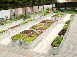 urban farm projects around