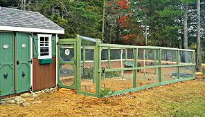 Run Defense Build Your Chicken Run To Keep Out Predators