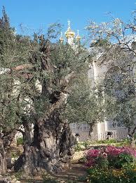 easter story the garden of gethsemane