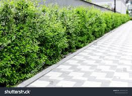 Green Natural Fence Along Walkway Park Nature Stock Image 1397719214