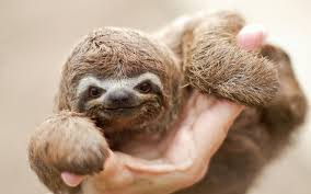 cute sloth wallpaper 67 images
