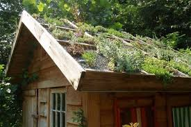rooftop gardens and green roofs