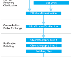Downstream Manufacturing of Gene Therapy Vectors