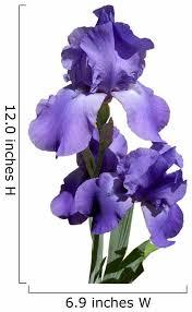 Purple Iris Flower Wall Decal Wallmonkeys Com