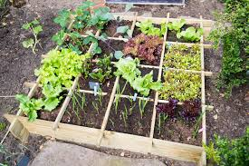vegetable garden in a small space