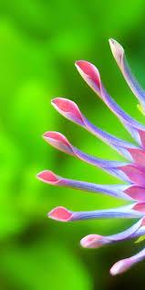 اجمل خلفيات موبايل في العالم Hd Flower Wallpaper Best Iphone