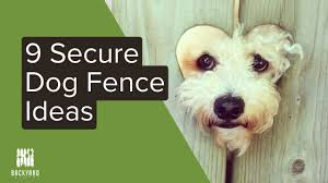 9 Dog Fence Ideas For Your Pups Youtube