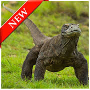 komodo dragon wallpapers for android