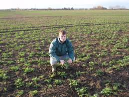 Difficult autumn may leave spring cropping as only option | The Northern  Farmer
