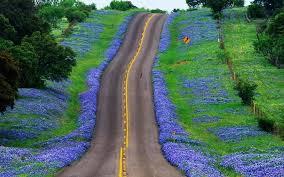 45 texas bluebonnet wallpapers on