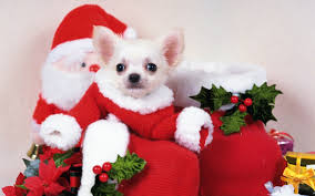 free cute puppy picture
