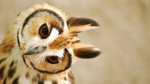 cute owl wallpaper 6784863