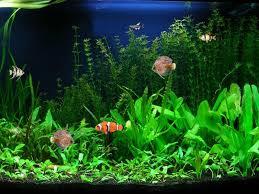 free screenshot aquarium fish