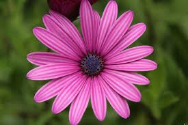 صور ورد Hd بألوان جميلة ومبهجة لعشاق الطبيعة