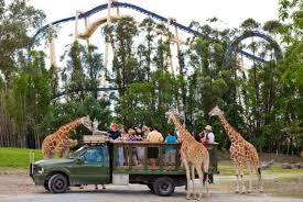 florida residents get free safari tour