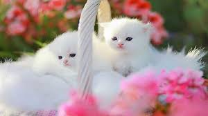 59 kittens wallpapers on