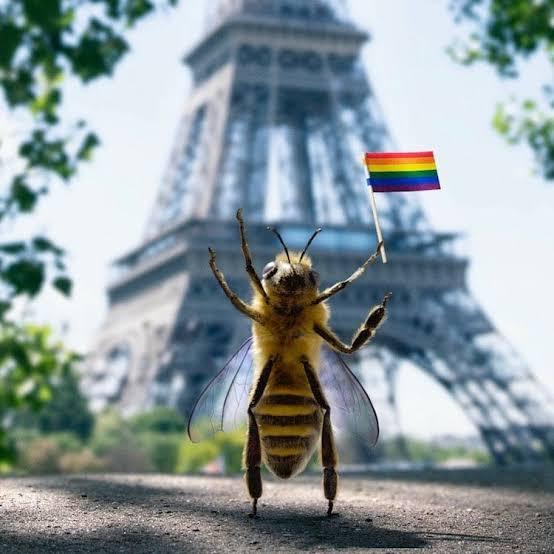 "Resultado de imagen de b la abeja influencer"""