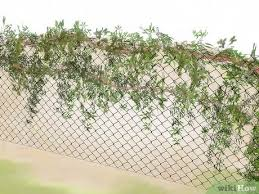 How To Hide A Fence 12 Steps With Pictures Wikihow