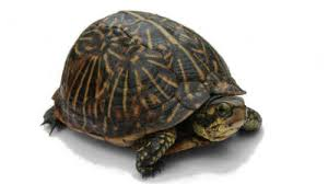 Politicians Are Like Post Turtles Starts At 60