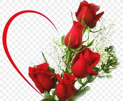 rainbow rose flower bouquet desktop
