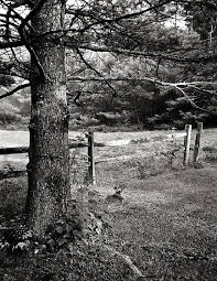 Tree Tree Trunk With Fence And Fence Post Black And White Photography Forum Digital Photography Review