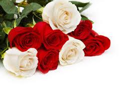 اجمل وردة في العالم الجمال يجتمع كله فى الورود و صوره احساس ناعم