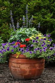 annual flowers for containers in sun or