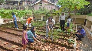 kitchen gardens in schools can improve