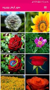 صور وخلفيات ورد رائعة بدون انترنت For Android Apk Download