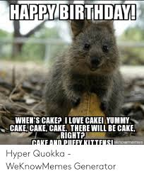 Image result for images of quokkas with birthday cake
