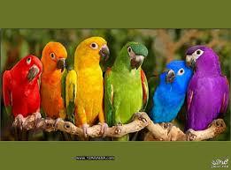 أجمل صور الطيور الملونة صور طيور عصافير ملونة وجميلة اجمل الطيور