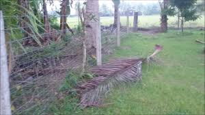 How To Make A Australian Hog Fence In The Philippines Youtube
