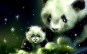 panda bear wallpaper 8o59yl9 picserio