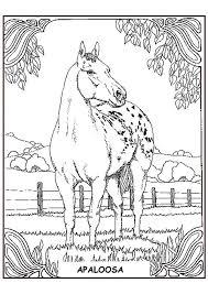 Kleurplaten Dieren Kleurplaten Dieren Paarden