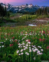 تحميل صور مناظر طبيعيه خلفيات مناظر طبيعية صور بجودة عالية