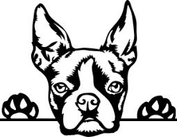Boston Terrier Dog Window Decal Ebay