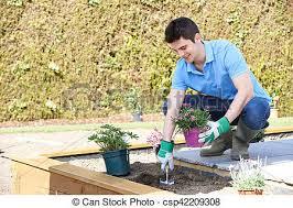 landscape gardener planting flower bed